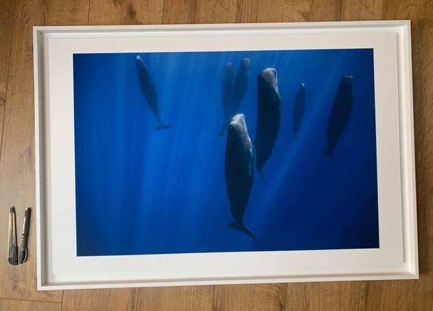 향고래는 선 자세로 무리 지어 물속에서 잔다는 사실이 2000년 발견됐다. 사진은 2017년 지중해에서 잠자는 향고래 무리를 프랑스 사진가 스테파니 그란소토가 촬영한