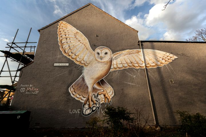 Barn Owl by painted by Jane Mutiny