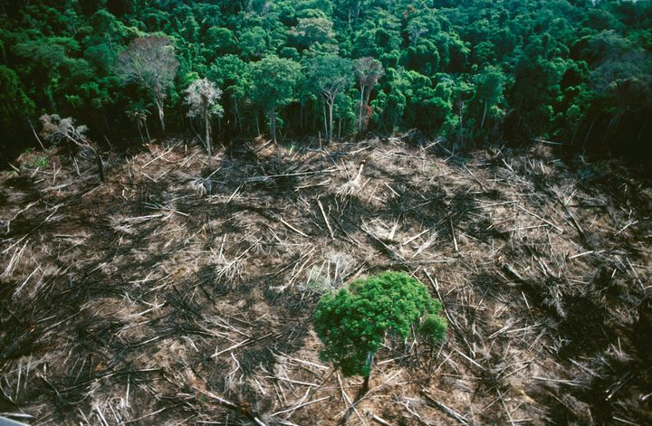 Clearing the forest destroys the equilibrium of water, minerals and organic matter. The threat to the Amazon rainforest is a