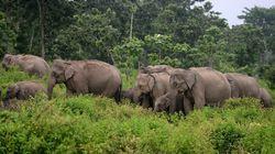 La explotación del elefante asiático, ¿de qué manera puedes