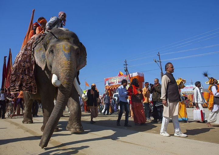 Un desfile de elefantes en la calle en Allahabad, India.