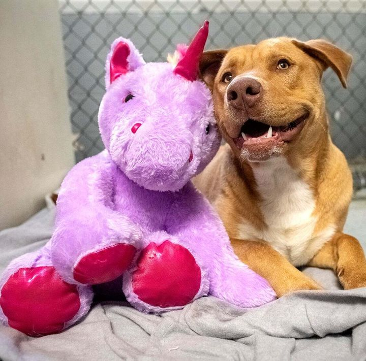 Sisu and his plush pal at the Duplin County animal shelter.