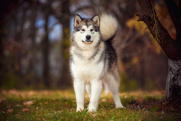 成犬の資料写真