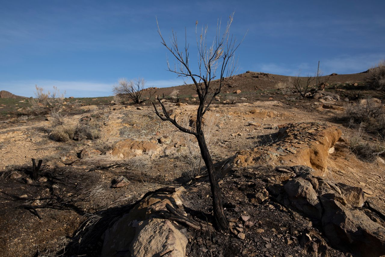 A burn area in the sagebrush along Leslie Gulch Road outside Jordan Valley, Oregon on Sunday, March 28.