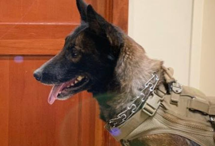 """A civil rights group has asked the Bend, Oregon, Police Department to no longer refer to a canine officer named """"Kim"""" as """"Lil"""
