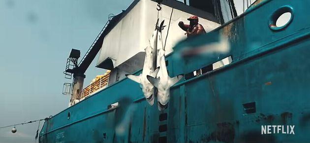 상업적 어업이 어떻게 해양 생태계에 영향을 미치는지 파헤친 다큐 '씨스피라시'가 지난 24일