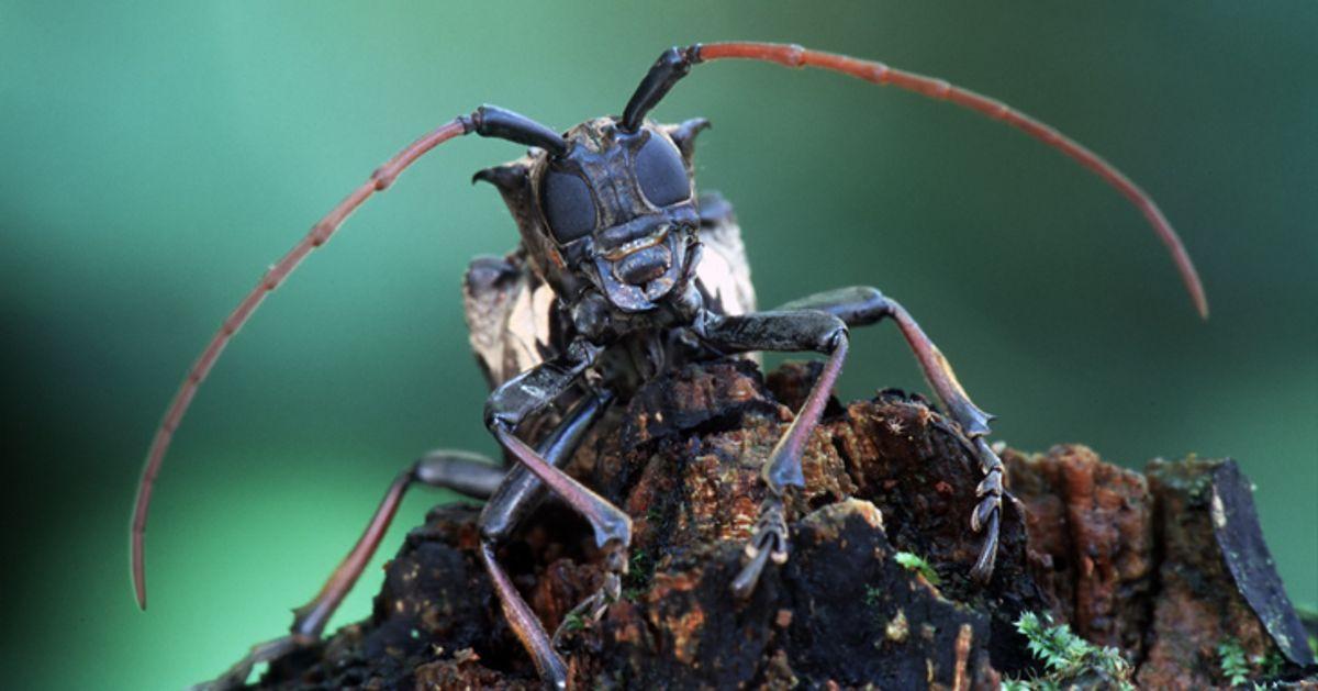Les espèces invasives, fléau méconnu qui coûte des milliards
