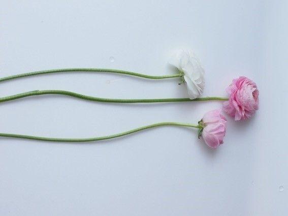 茎が曲がっているだけで花はきれい