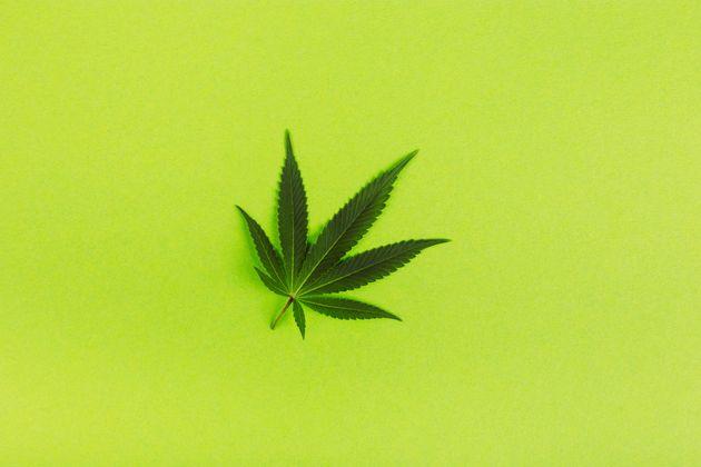 Beautiful green leaves of marijuana pattern on bright green background