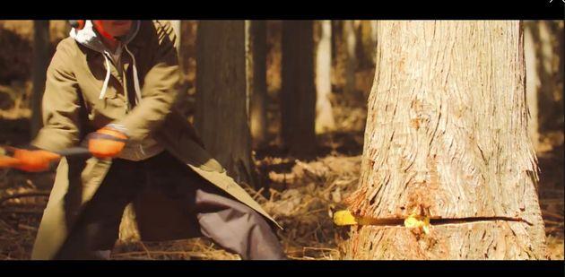 樹木を伐採。