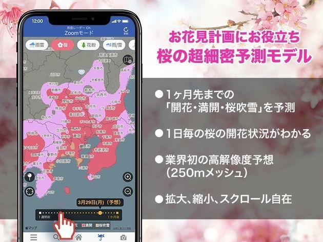 桜の超細密予測モデル