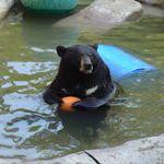 Έρευνα: Μυστηριώδης ασθένεια κάνει τις αρκούδες φιλικές προς τους