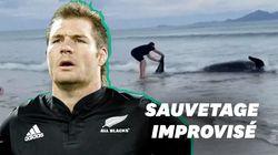 En Nouvelle-Zélande, cette légende des All Blacks sauve une baleine