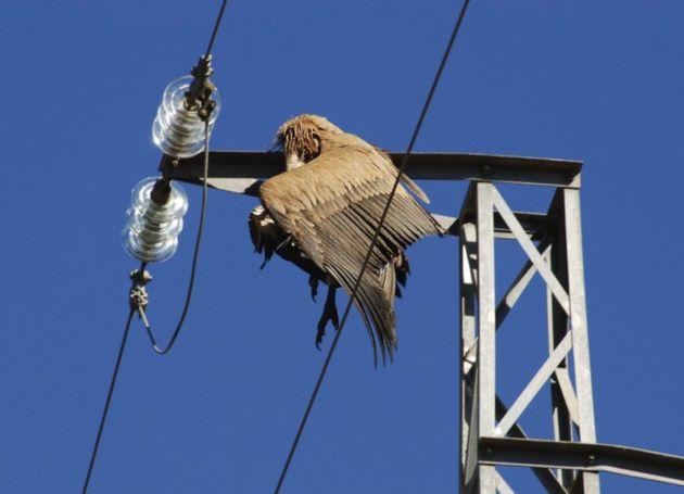 Un ave muerta en el tendido