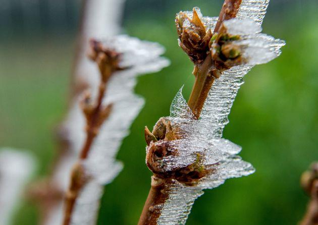 En ce mois d'avril 2021, l'agriculture française subit de plein fouet des gelées dévastatrices pour les...