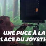 Après les cyber-cochons, Elon Musk présente un singe jouant aux jeux vidéo grâce une