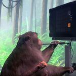 Βίντεο: Η Neuralink παρουσίασε πίθηκο να παίζει βιντεοπαιγχνίδι μόνο με το μυαλό
