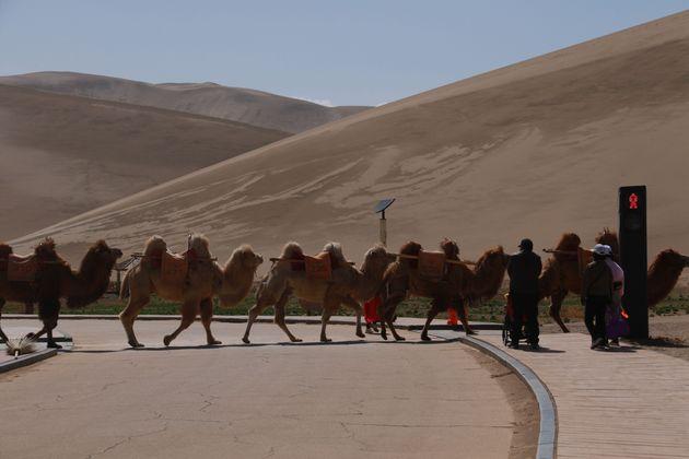 Τα πρώτα φανάρια στον κόσμο για καμήλες είναι