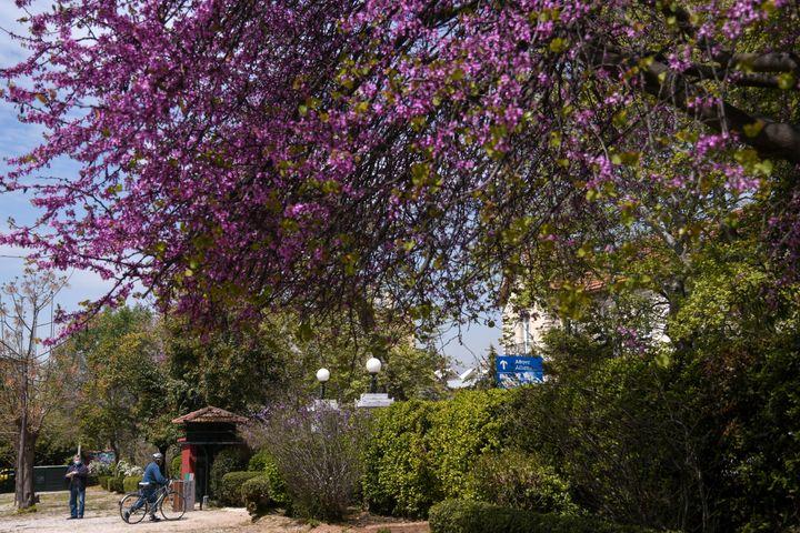 Βόλτα στο Αλσος Κηφισιάς