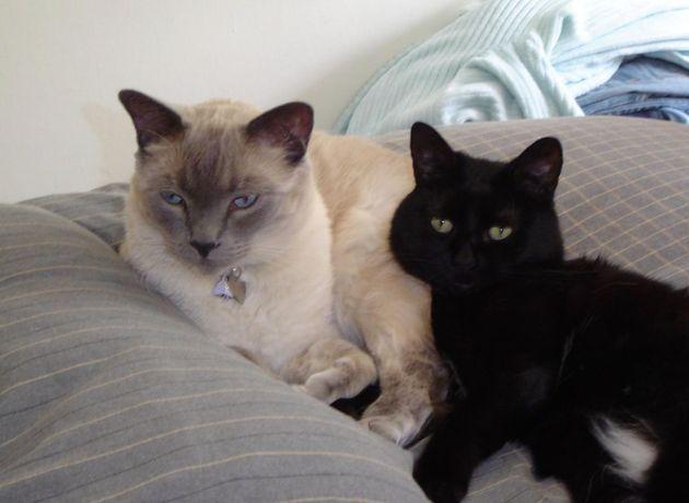 고양이 윌리엄과