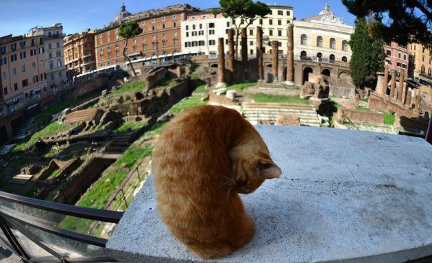 Uno de los muchos gatos que habitan la zona de Largo