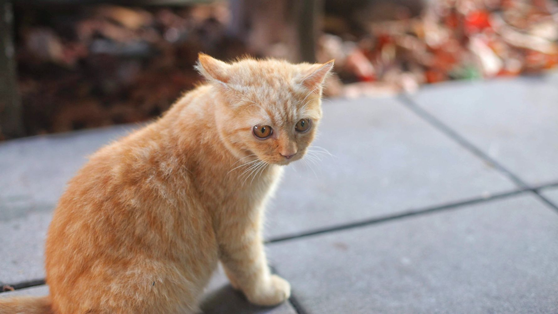 Killing A Cat In A Hit-And-Run Could Become Illegal In New Hampshire