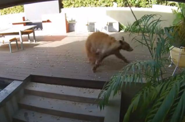 놀라서 도망가는 곰