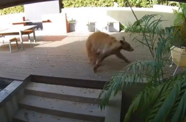 驚いて逃げるクマ