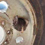 子ネコ、頭が車のホイールにハマって抜けなくなる。助けてにゃ〜