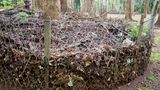 Compost organic fertiliser by microorganism, keep dried leaf surrounding a tree and cover by the plastic net for decomposer