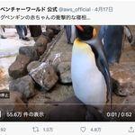 首、とれてない?キングペンギンの赤ちゃんの寝相がホラーだった(動画)