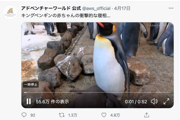 キングペンギンの赤ちゃんの衝撃的な寝相