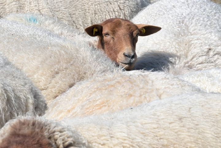 """Lanolin is essentially the skin oil from sheep and is """"great for trapping moisture into the skin,"""" says dermatologistStacy Chimento."""