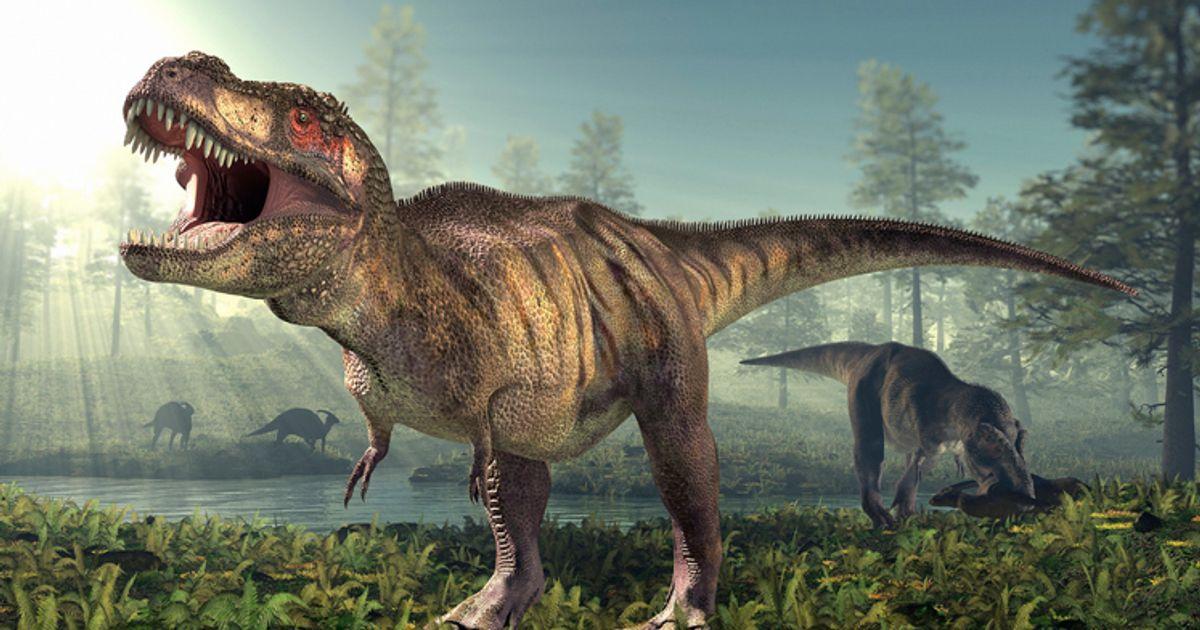 Selon cette étude, vous n'auriez pas eu grand chose à craindre d'un T-Rex qui marche