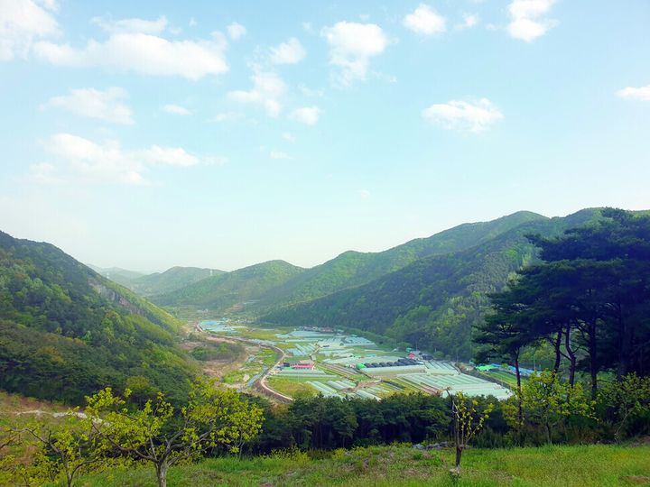 한재미나리 재배단지인 경북 청도군 청도읍 한재마을 풍경.