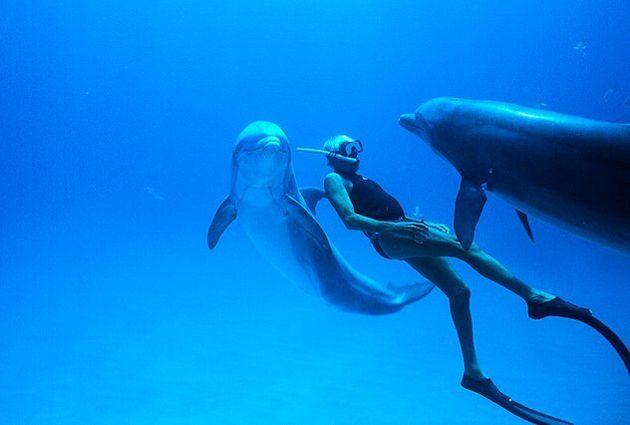 «Dolphin