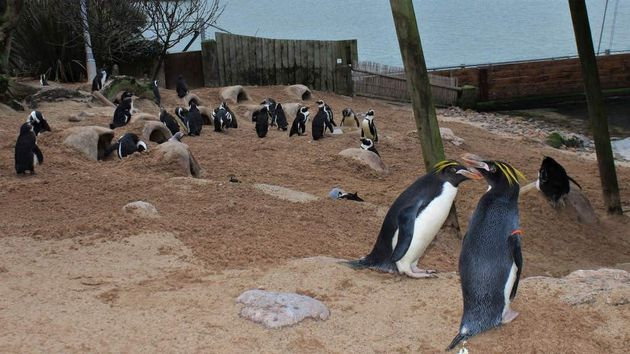 Beaks Going Everywhere – How To Rehome An Entire Zoo In A Pandemic