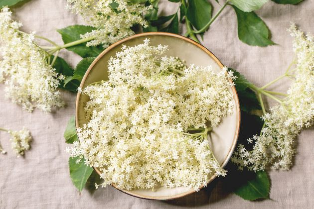 How To Forage Elderflower For A Super Simple Cordial –And More