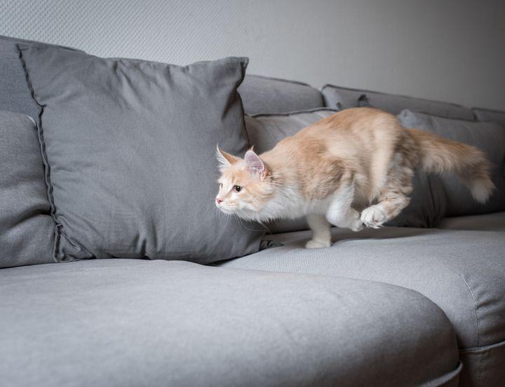 Gato corriendo por el sofá.
