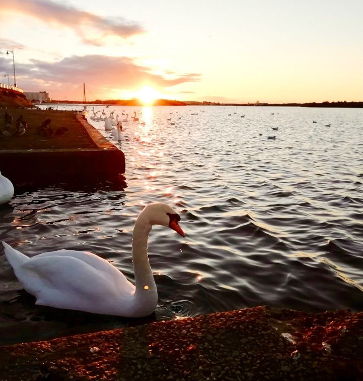 This peaceful sunset was captured by Clare Forster from Warrington at Crosby Marina, Merseyside.