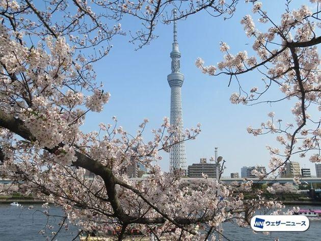 桜が満開にならない未来が訪れる?
