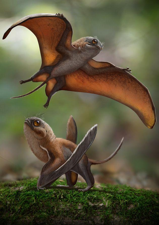 「シノマクロプス・ボンデイ」の想像図。オンライン雑誌「PeerJ」に発表された論文より。
