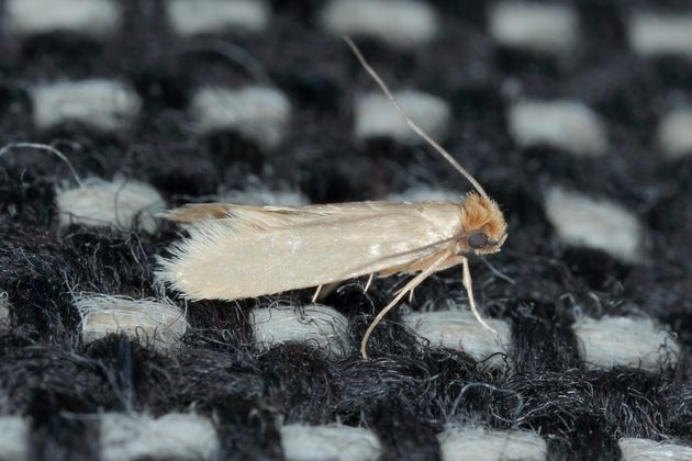 How To Get Rid Of Moths If Theyre Wreaking Havoc In Your Home