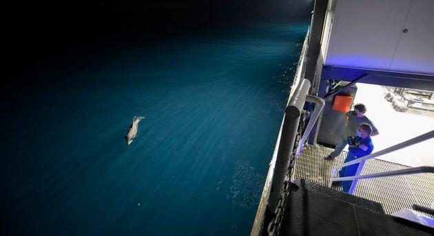 Μέλη του πληρώματος του πλοίουπερισυλλογής SpaceX GO Navigator, Μπιλ Σπεντς και Τζο Ακάμπα, εν αναμονή της προσθαλάσσωσης τουSpaceX.