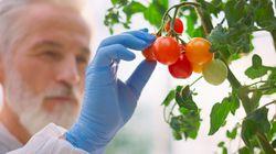 Biologico, all'Ue serve una transizione burocratica (di L.