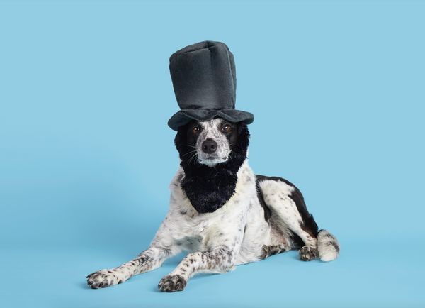 Remember all those times your dad lamented the lack of Abe Lincoln costumes for dogs? Those days are long gone, thanks to thi