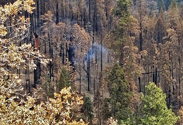 Το δέντρο που καίγεται