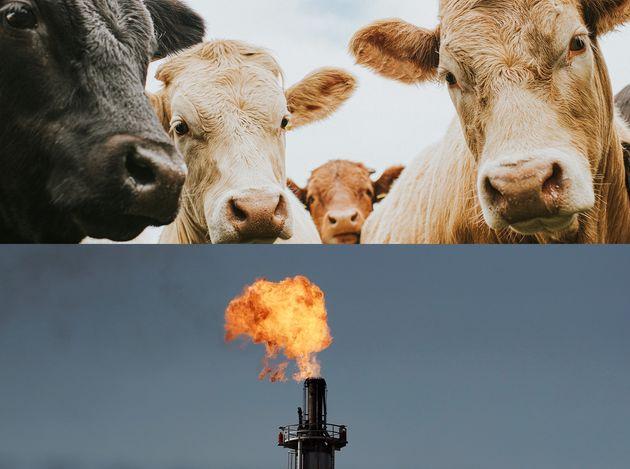 Des solutions simples existent pour réduire les émissions de méthane, souligne un...