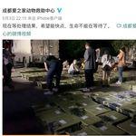 生きた犬や猫を箱詰めに...中身が分からない「動物版ブラインド・ボックス」か。中国で批判殺到