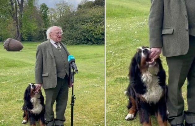 '애교쟁이 신-스틸러' 아일랜드 대통령의 인터뷰 중 그의 반려견이 귀여운 장난으로 모두의 시선을 사로잡았다